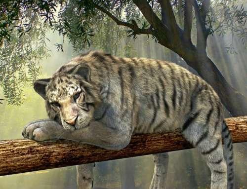 Wie Vorgabedokumente zu zahnlosen Tigern werden